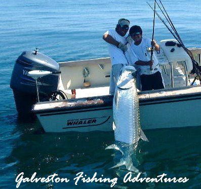 17 best images about catching a giant fish on pinterest for Fishing galveston tx