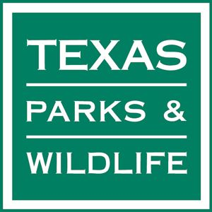 Lost in the woods survival information for kids from Texas Parks & Wildlife