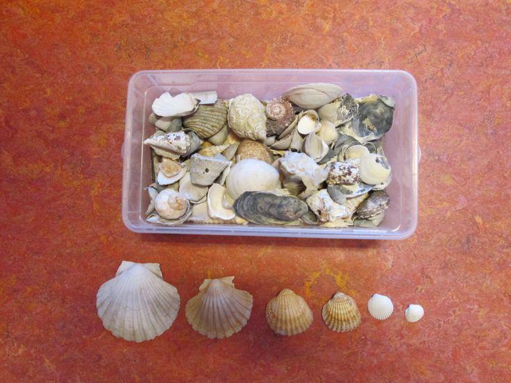 verzameldoos schelpen: vergelijken, ordenen, tellen, etc. Nutsschool Maastricht