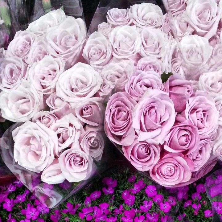Fresh lilac roses for the boutique