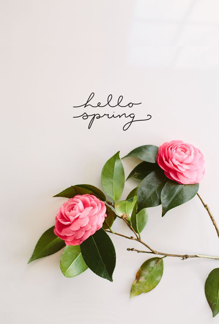 Hello_Spring_WallPaper_Ipad_01.jpg 768×1 136 pixels