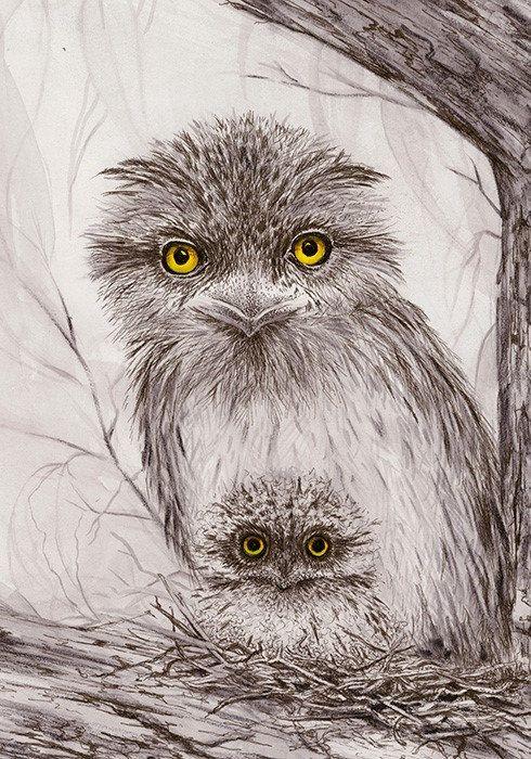 Artwork Tawny Frogmouth Mum'n'Bub  Open edition by DaisyClaridge