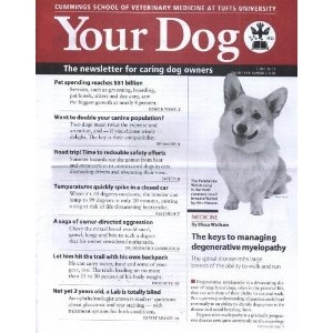 Your Dog (1-year auto-renewal) --- http://www.pinterest.com.luvit.in/6ce