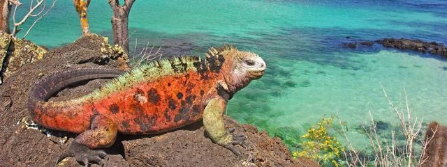 The Galapagos Islands and Machu Picchu- Two incredible adventures in one www.iyctravel.com