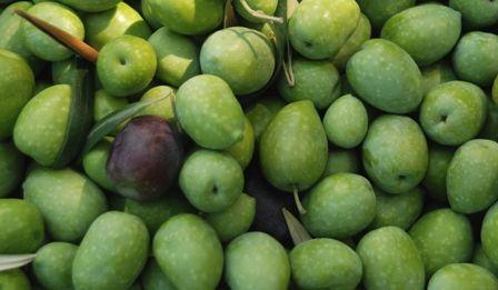 #Olives