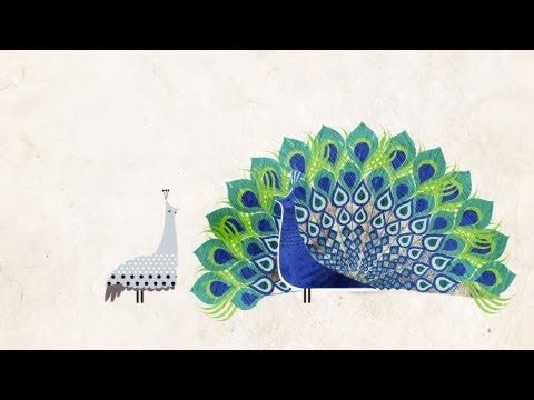 "A Miraculous ""Accident of Physics"": Carl Zimmer Explains How Feathers Evolved, Animated 