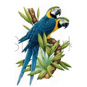 Blauwe Papegaaien muursticker StickerkidS