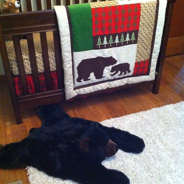 Best 25+ Bear Skin Rug Ideas On Pinterest