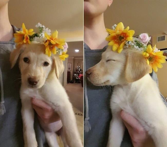 Sanatlı Bi Blog Köpek Yavruları ve Çiçeklerin Birleşiminden Oluşan 30+ Sevgi Dolu Fotoğraf 30
