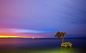 tramonto, lago, albero solitario