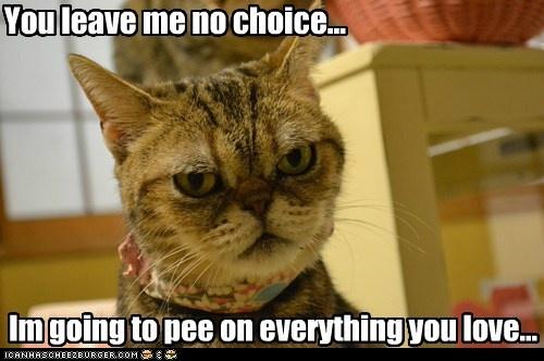 mind blown cat