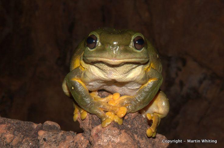202 Best Frog Tattoos Images On Pinterest Frog Tattoos