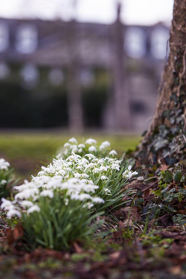 Calbridge Manor Gardens