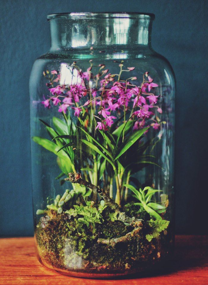 Hermetica London Terrarium #tinyflowers #orchids