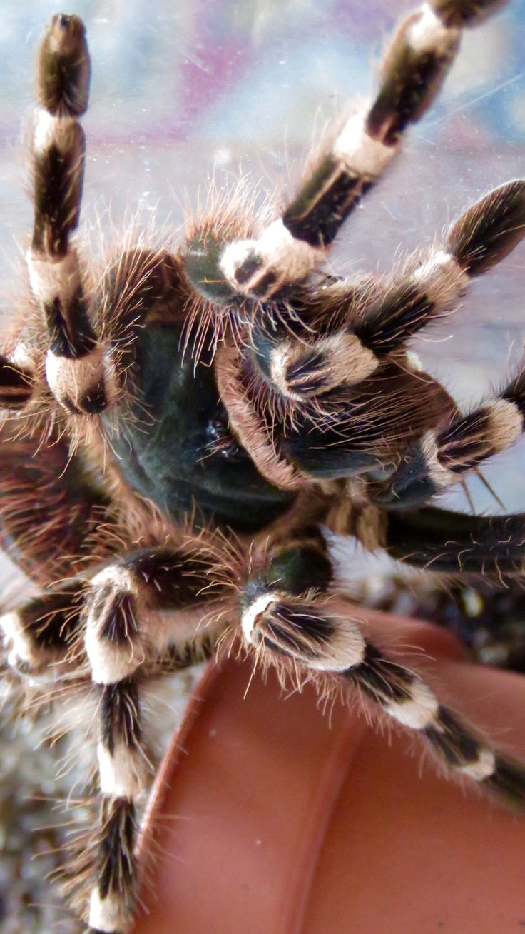 This is a photo of Crazy Spider From Bugs Life