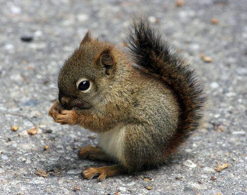 squirrels are my favorite, especially baby squirrels.