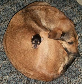Awww now that's how you cuddle '