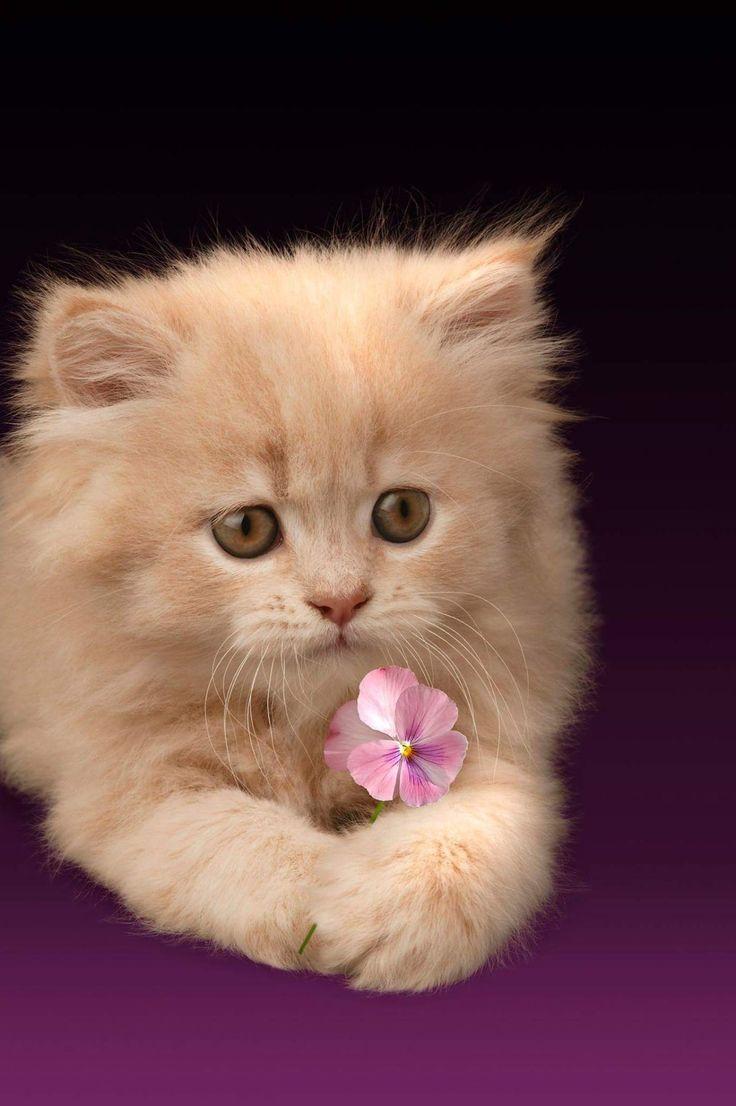 Картинки для одноклассников на главную котята