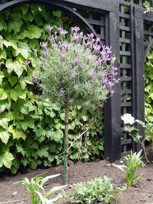 Garden Design Nursery great plants for pots | hedge garden design & nursery | a