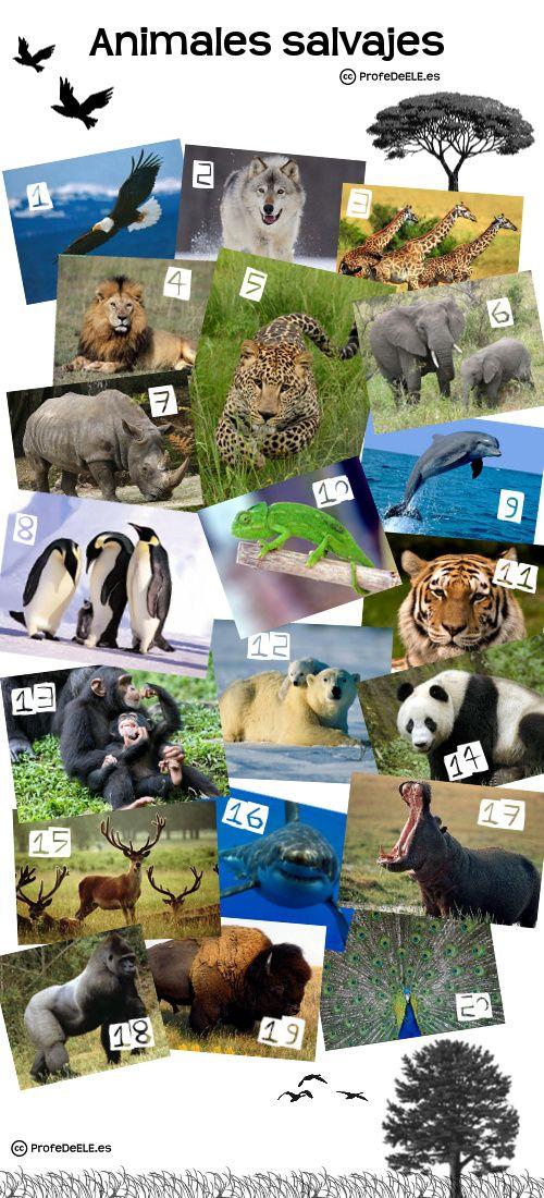 Animales salvajes (B1) ~ Actividad online para practicar el vocabulario de los animales en español con imágenes para relacionar | @ProfeDeELE.es.es.es