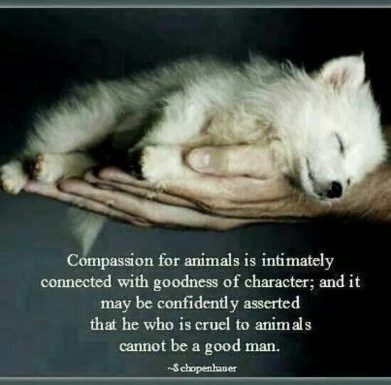 Shared via Husky Forever. A beautiful statement that states clearly absolute truth.