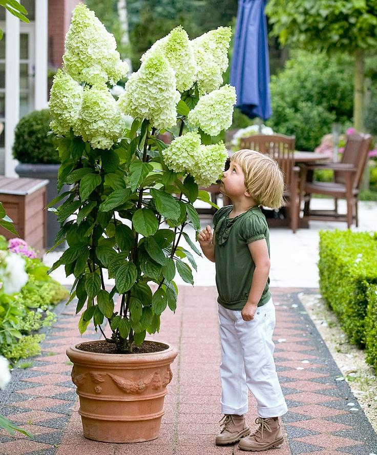 plantas para el balcon