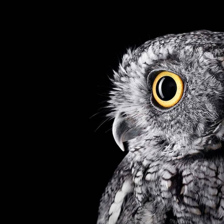 Affinity – Les incroyables portraits d'animaux du photographe Brad Wilson (image)