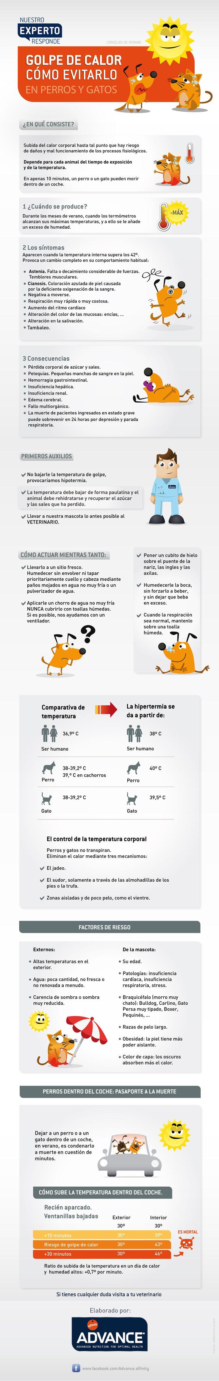 Consejos  para cuidar tu mascota en verano: ¡Cuidado con los golpes de calor! - www.facebook.com/Advance.affinity - www.affinity-petcare.com/advance