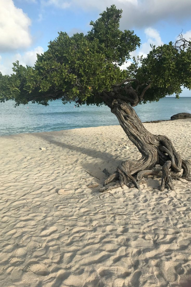 Aruba has many beautiful beaches but here