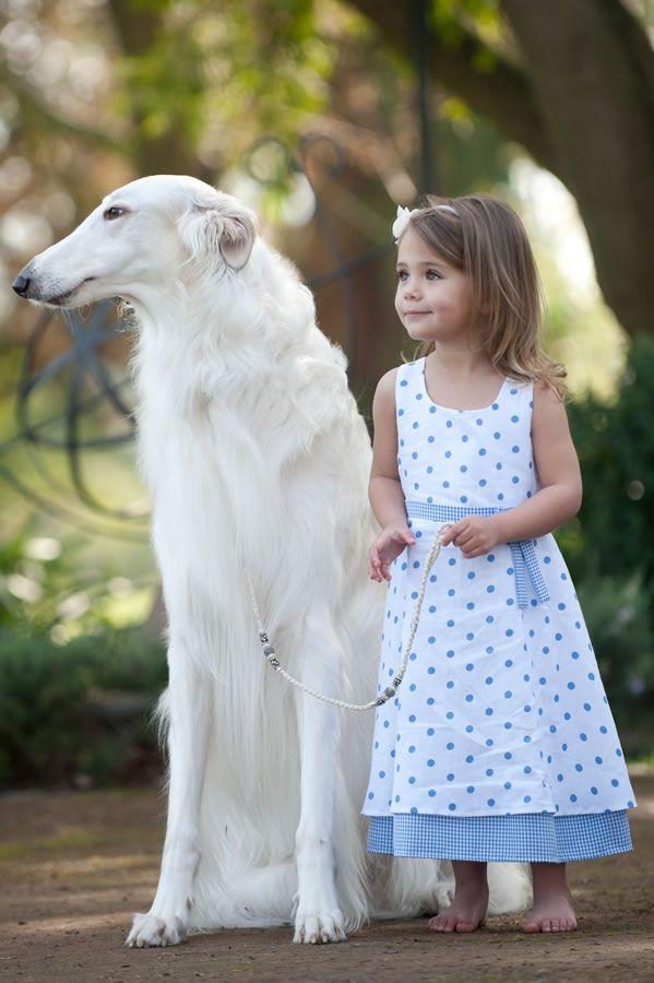 white borzoi with little girl