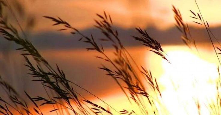 La bella melodía de Beethoven - Para Elisa  montadas con una bellíisimas imágenes de puesta de sol. La ciencia ha demostrado que escuchar música clásica como Para Elisa - Beethoven realmente puede ayudarle a relajarse, refrescarse y recargar energías. Con sólo unos pocos minutos de música relajante para aliviar el estrés y la curación,, música de piano suave para dormir y estudiar, si usted está listo para dormir, la bienvenida a un nuevo día, o estudiar para un examen, esta música clásica…