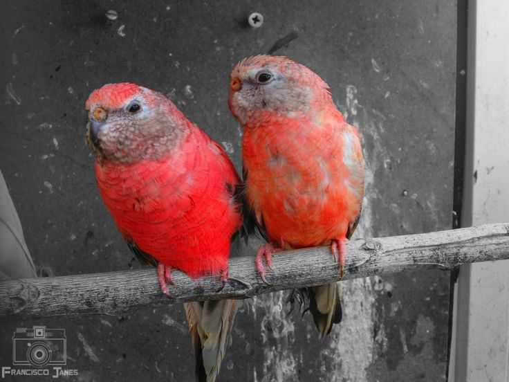 Bird - null