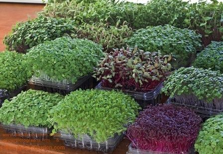 25 best ideas about agriculture farming on pinterest for Best growing medium for microgreens