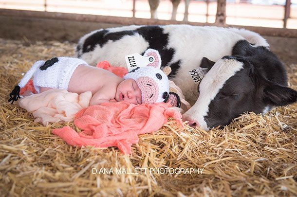 baby and calf
