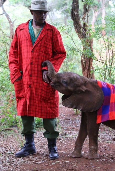 Garments for Good: World Elephant Day - Read more at our blog.