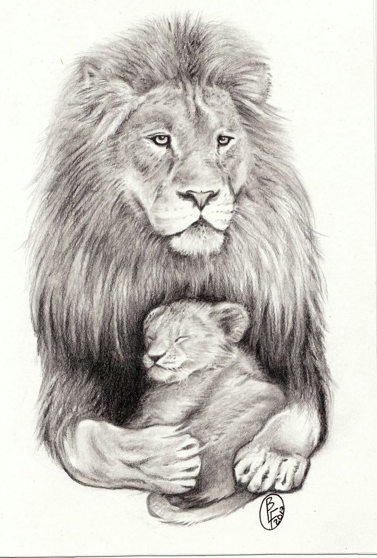 Львенок карандашом картинки
