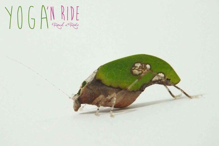 Leaf or insect? Florianopolis Brazil www.rocknride.eu