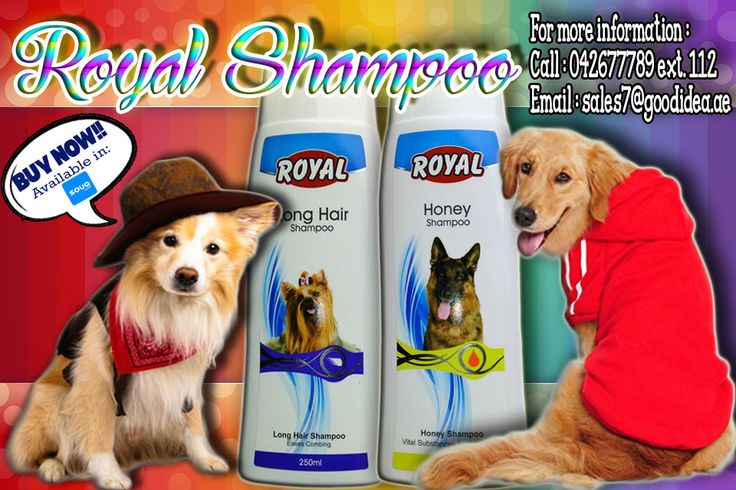 Royal Shampoos are a great value for pets and their owners. For Eases combing and Vital substances for skin and coat. Avail Now for affordable prices. For more information: Call:042677789 loc 112 Email:sales7@goodidea.ae ◘ We are open for those who have petshops,pet store and Good samaritans helping those stray with promotional offer ♥ Also Available in : SOUQ.COM