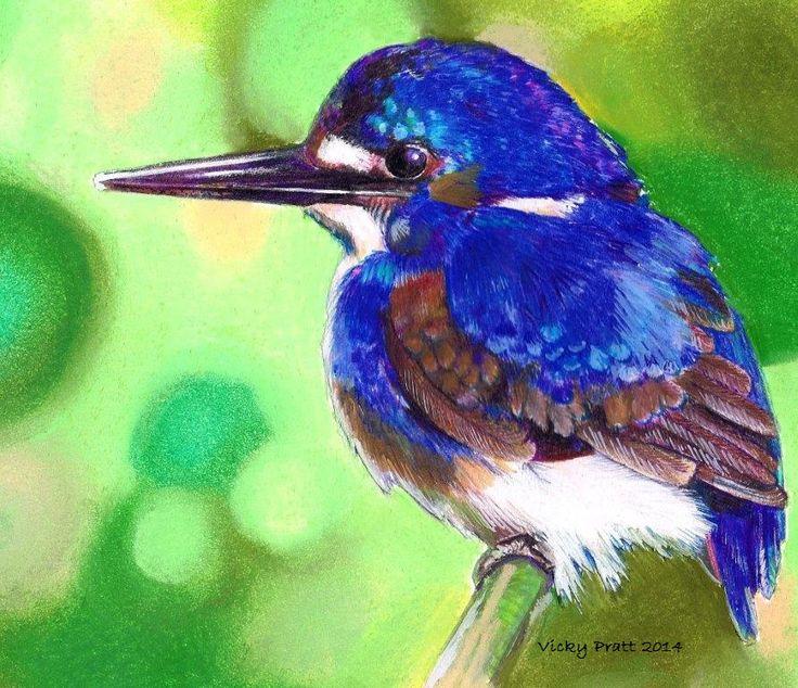 Kingfisher. Coloured pencil for the bird and pastel for the background. http://vicpratt.wix.com/vickypratt Find me on Facebook Vicky Pratt - Illustrator.