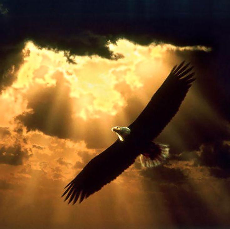 Abundancia, Amor y Plenitud : LA RENOVACION DEL AGUILA
