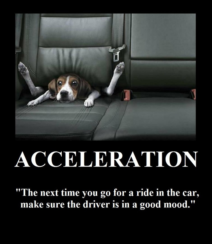 Best Dog Car Seat >> Acceleration | Motivational Posters (Cats & Dogs) | Pinterest | Funny signs and Humor