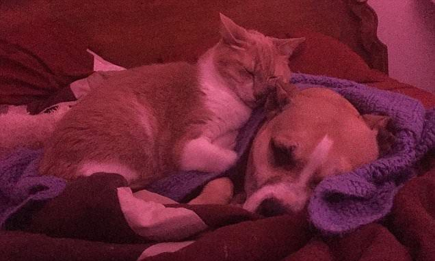A cat gave a comforting cuddle to a dog that was scared of fireworks