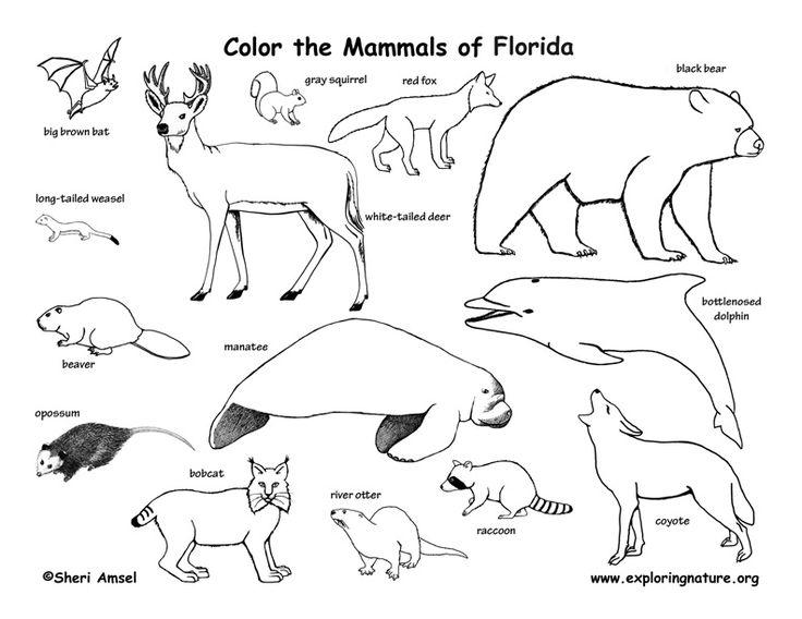 29 best images about Coloring Habitats