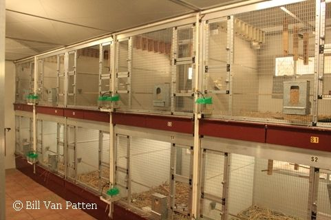 Stgf Breeding Cages With Stress Perches Bird Aviary