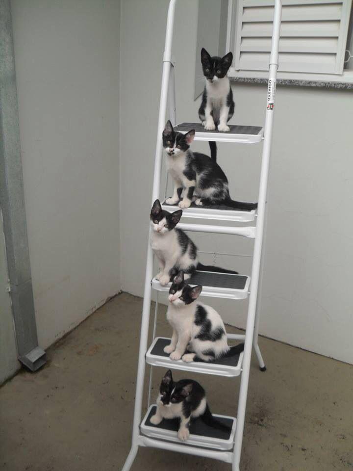 Poezen op de trap...