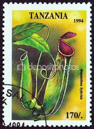 Скачать - Танзания - около 1994: Марку, напечатанную в Танзании от «Тропические цветы» выпуск показывает hybrida непентес, около 1994 — стоковое изображение #74641457