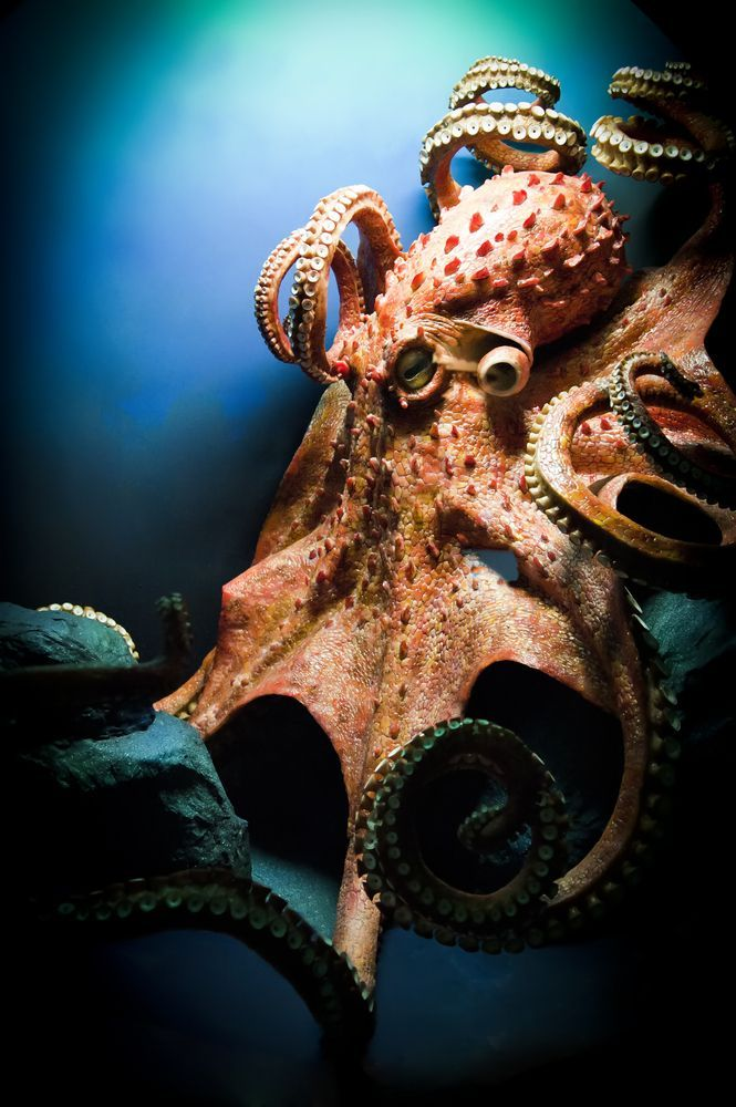 Getting on this octopus's bad side seems like a mistake.