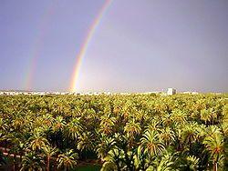 Palm Groves (Palmeral) of Elche park in Alicante