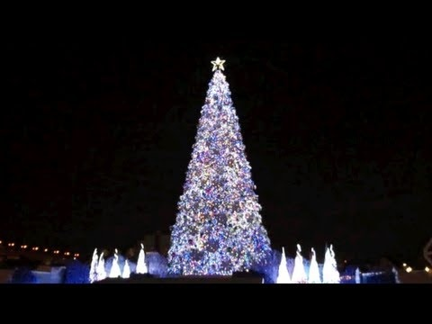 World's Best Christmas Tree listed in The Guiness Book of Records 2011