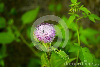 A wild flower with blury leafs background. additional raw formatn